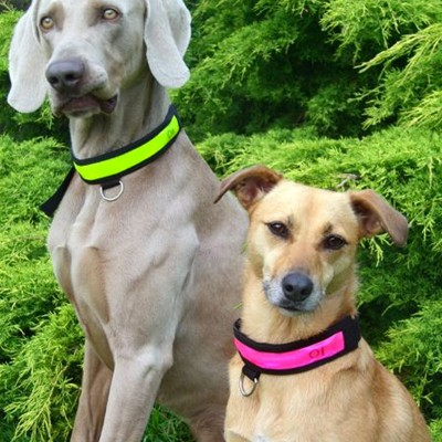 Hi Vis Flashing Dog Collar by Equisafety