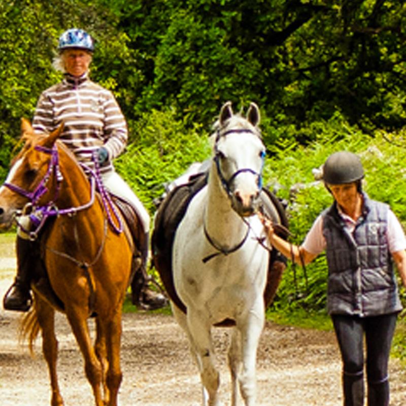 Horse Wear & Care